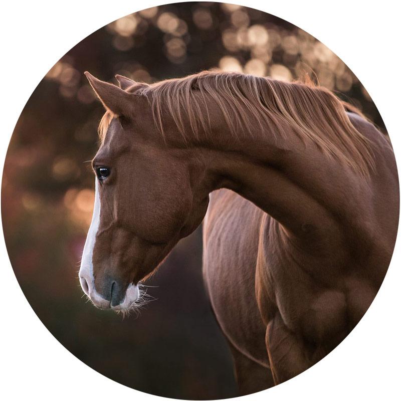 Dermatologie - Tierarztpraxis Dietz, Ihre Fachtierärztin für Pferde