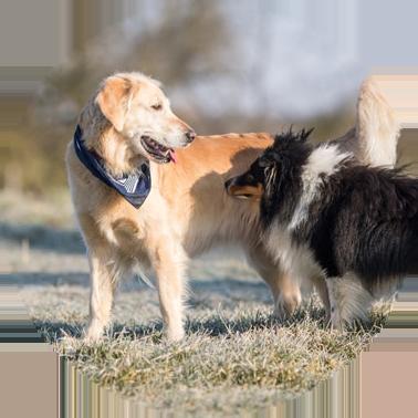 Kastration Hund - Kleintierpraxis Dietz, Ihre Tierärztin in Oberickelsheim