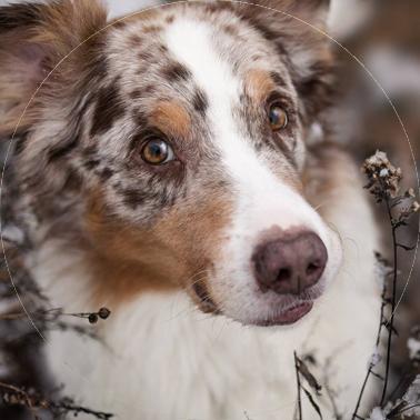 Kleintierpraxis Dietz, Ihre Tierärztin in Oberickelsheim