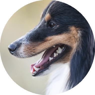 Spezialist für Zähne - Kleintierpraxis Dietz, Ihre Tierärztin in Oberickelsheim